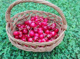 Eco villa Gasparini Istria - welcome basket