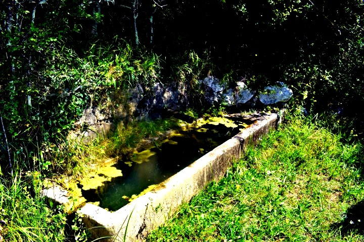 Waterspring Čiritez - natural water springs Istria