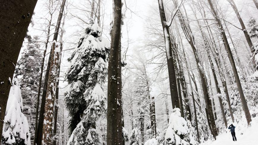 Medvednica, Sljeme, Croatia - Primordial white stillness