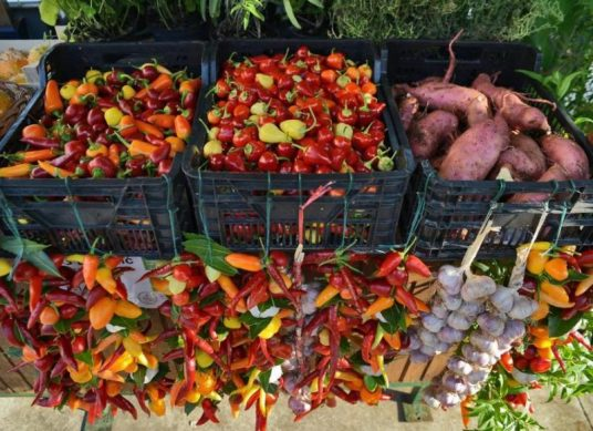 Eco holidays in Istria - eco market