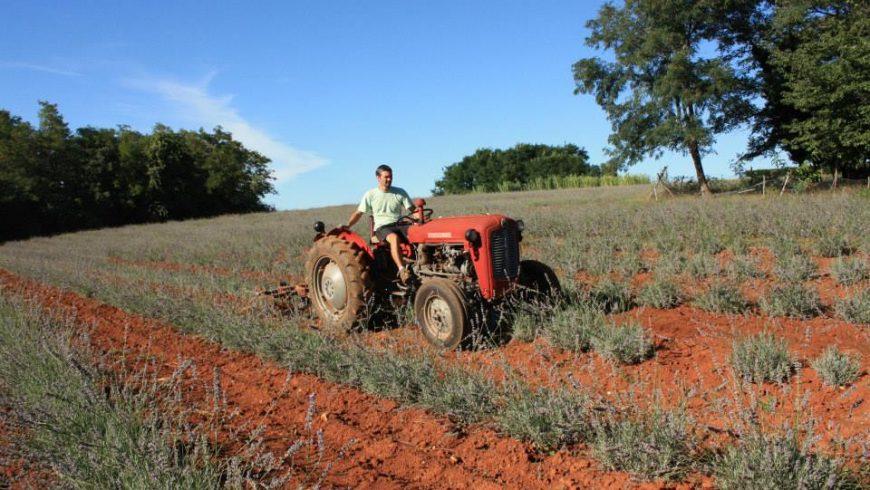 organic farming istria