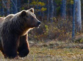 fauna of national park