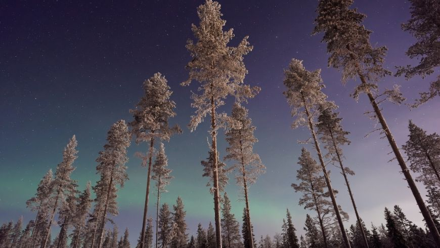 northern lights in snowy woods