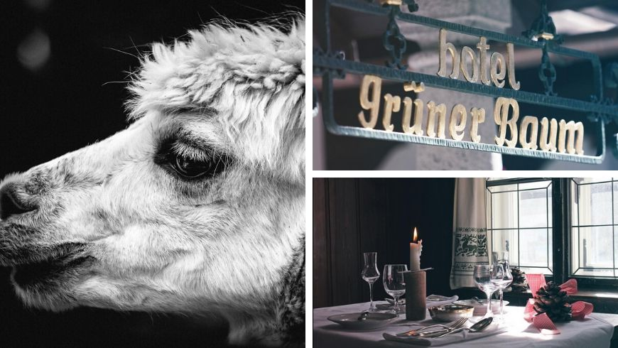 green hotels with alpacas in austria ecobnb