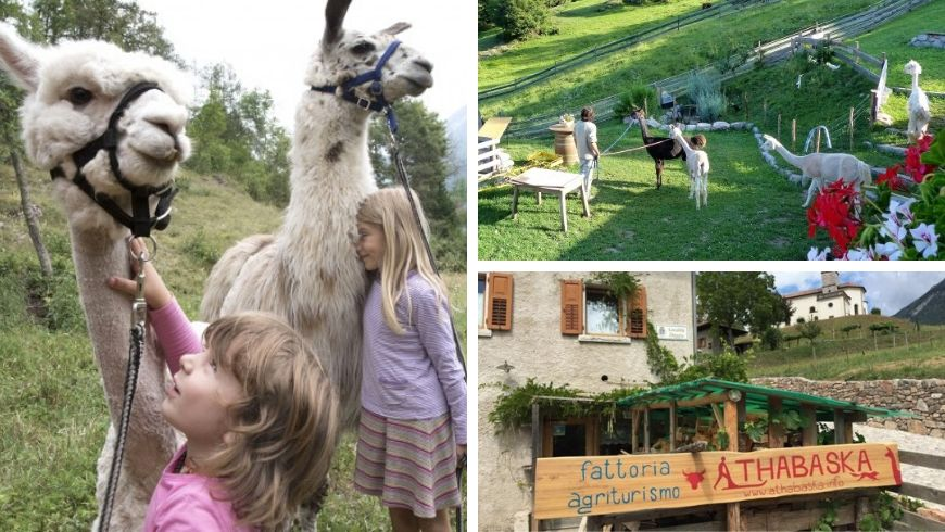 alpacas with children in italy ecobnb