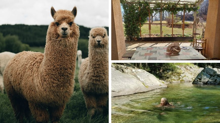 alpacas in farmhouse in italy on ecobnb