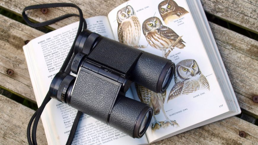 guide bird watching