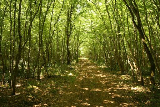 The Kontija forest