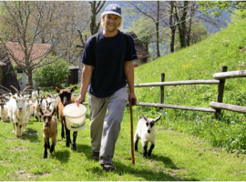 Organic mountain farm in Slovenia: chose this guest house to spend your rural holidays in Slovenia