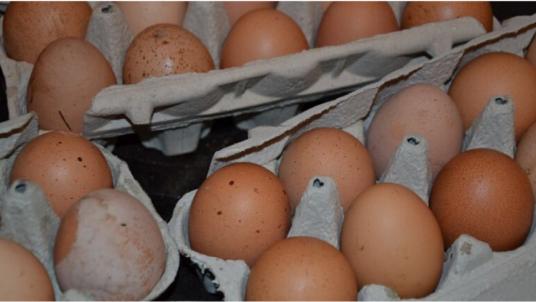 Experience an authentic farm life at the Skvor Holiday Rooms & Farmhouses
