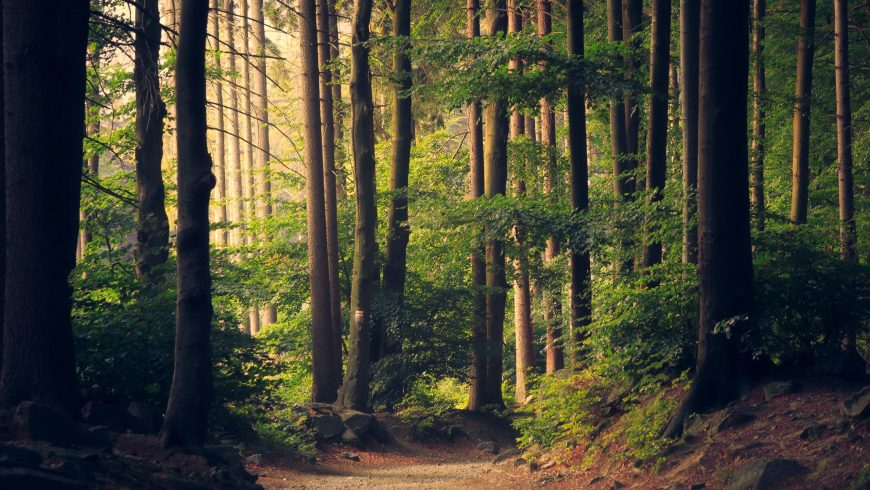 Our immune system needs forests