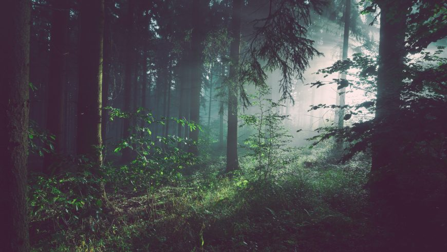 How forests improve the immune system