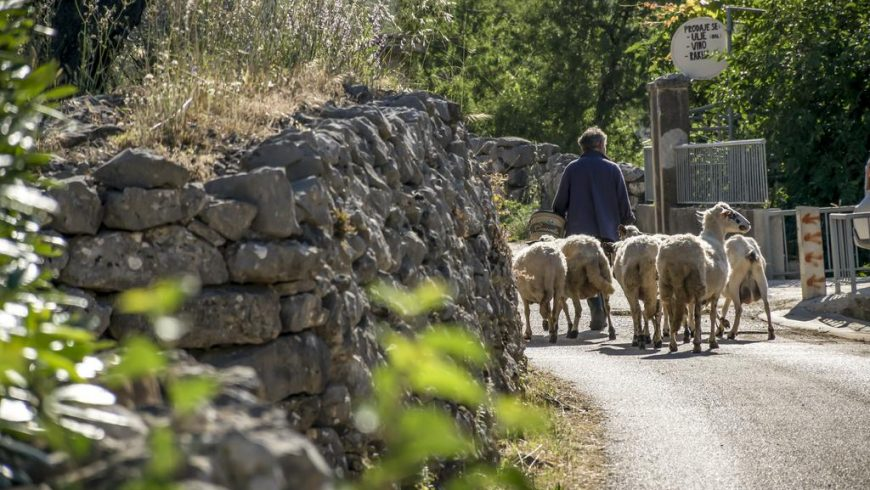 Local experiences Dalmatia