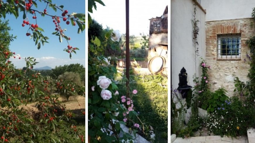 Photo of the roses and the vetegation surrounding the straw house