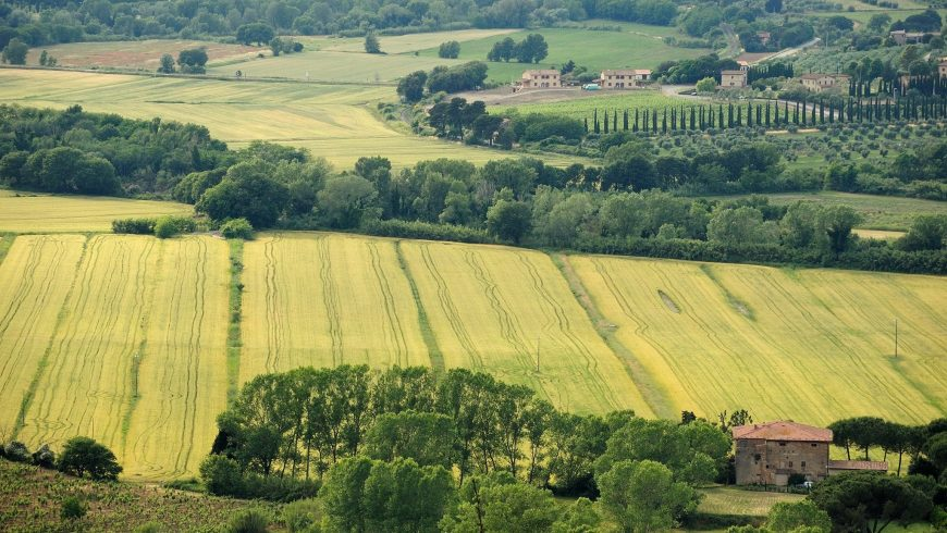 Tuscan cultivated field
