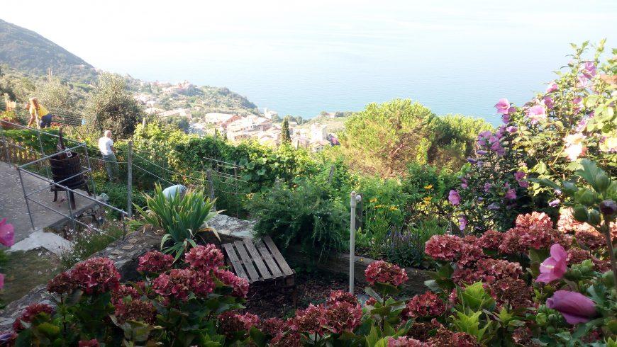 Vegetable gardens on terraces