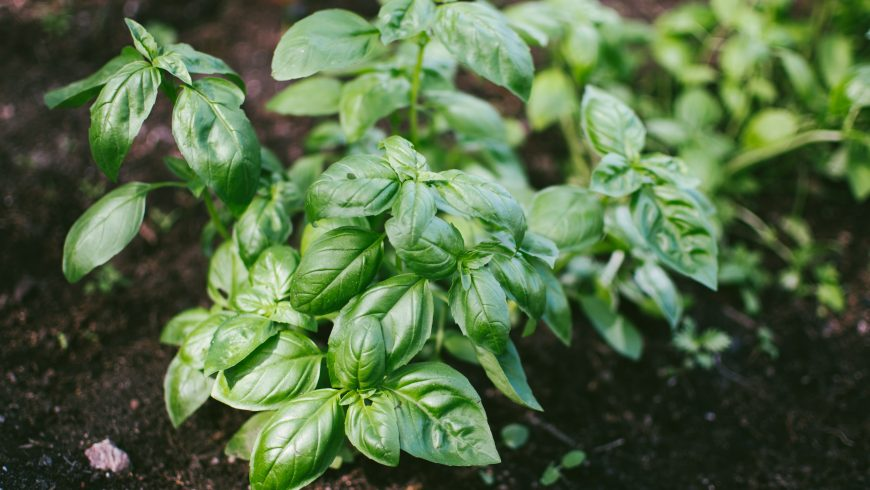 Grow your own food to create a sustainable menu