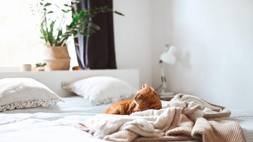 eco-friendly bedroom decor