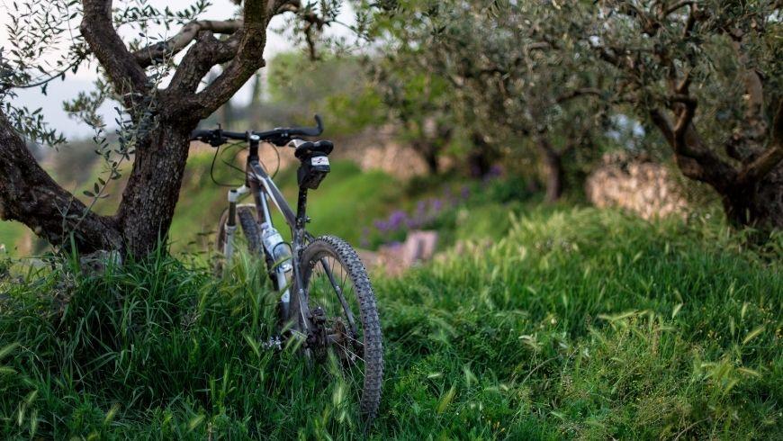 Bike in an olive grove