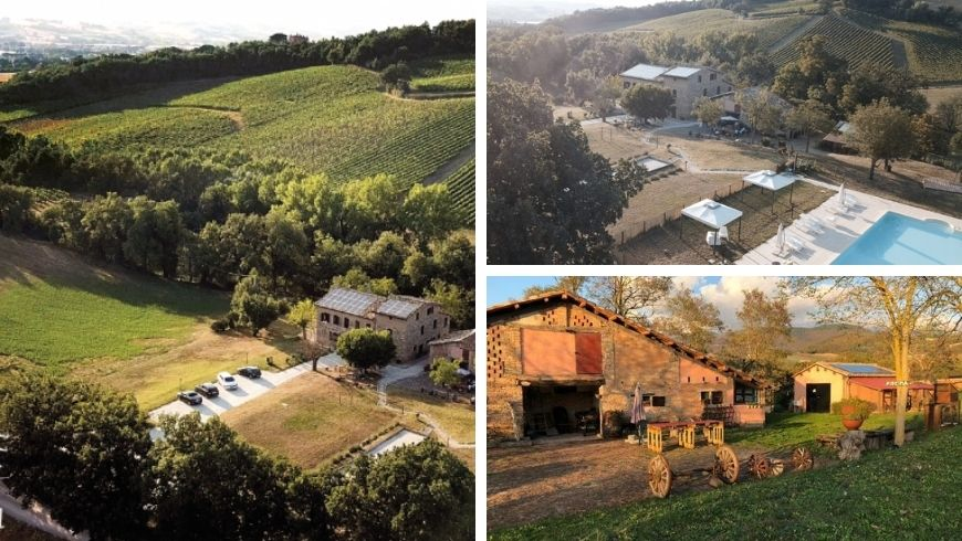 organic farm among the vineyards and hills of the Marche