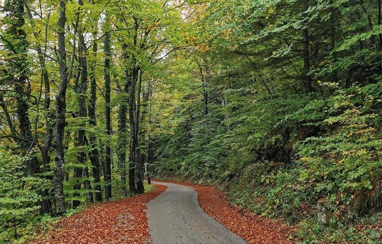 Road next to Divjake Log Home eco chalet in Croatia