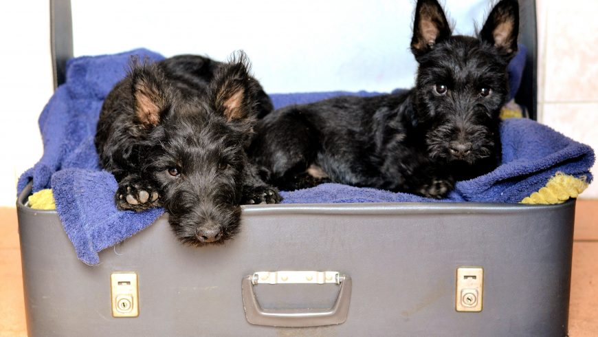 2 dogs in an open suitcase