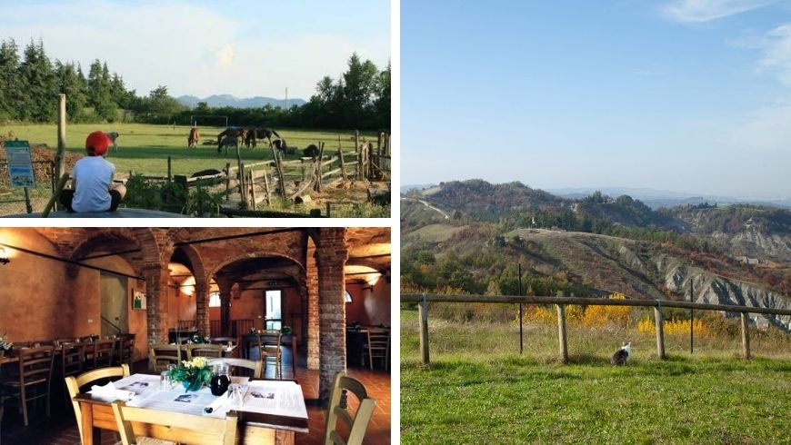 Holiday Farm Dulcamara