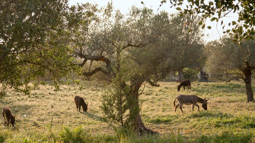 Farmhouse: Can Martí. Where you can escape the hustle and bustle of the city