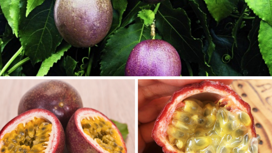 Passion fruit. Azores local food.