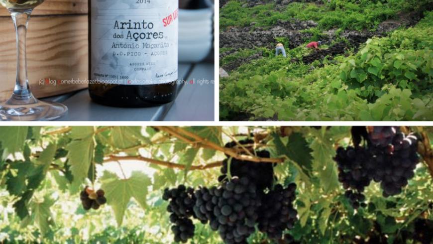 Arinto dos Açores. Local food Azores