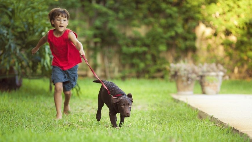 dog kid benefits