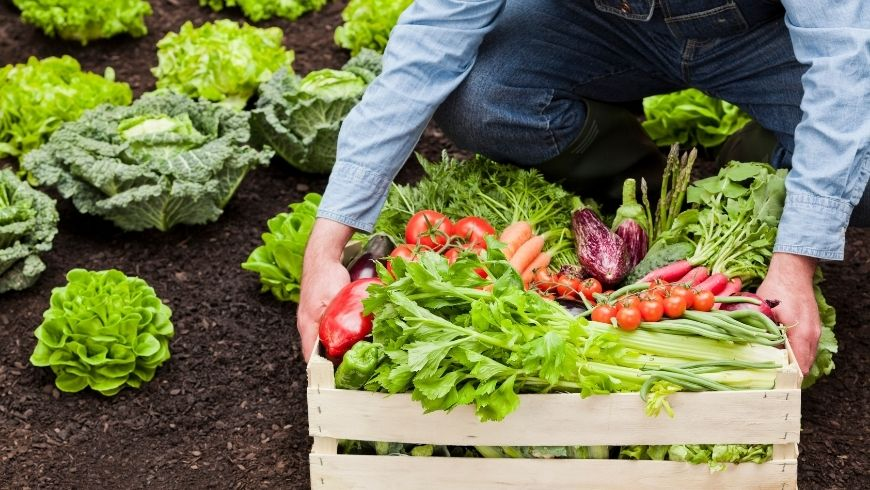 organic local food