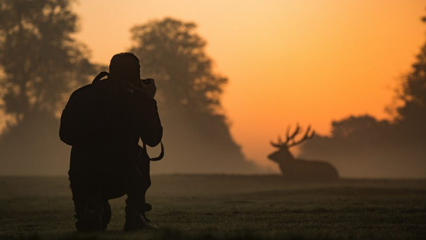Basic Guide to Wildlife Photography 2021