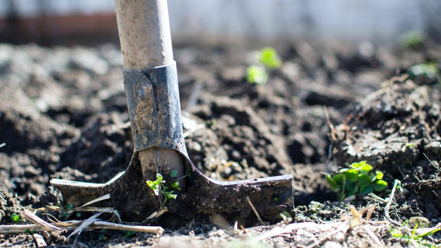 organic agricolture