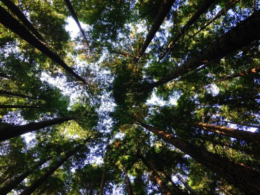 preserving our forest