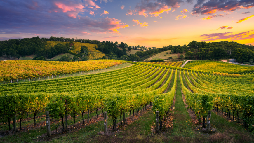 Among the vineyards of Italy