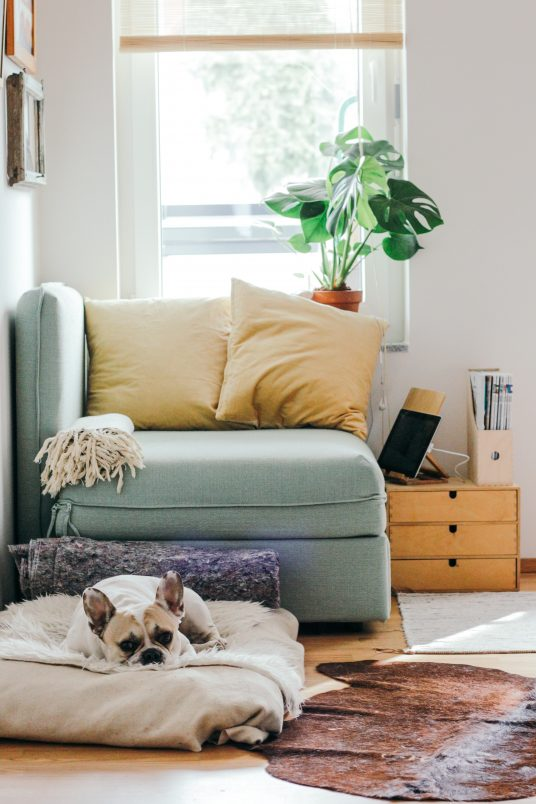 plants can help to reduce indoor pollution