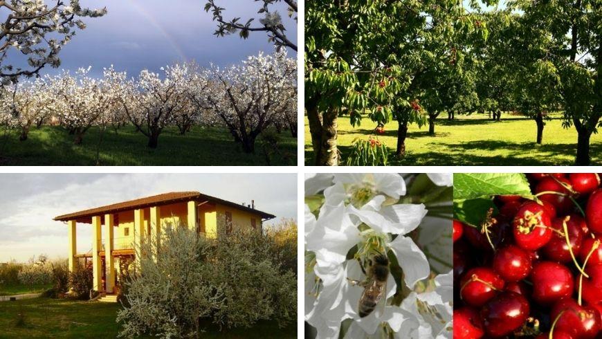 Agriturismo I Toschi, blossom