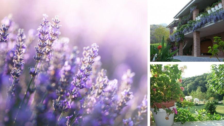Agriturismo Doremi B&B Farm Cuneo, Italy's blossom