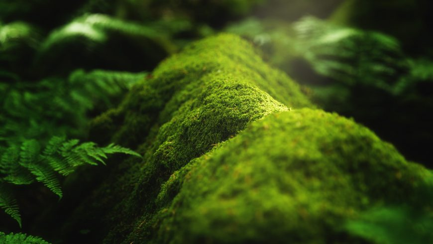 Biodiversity: moss