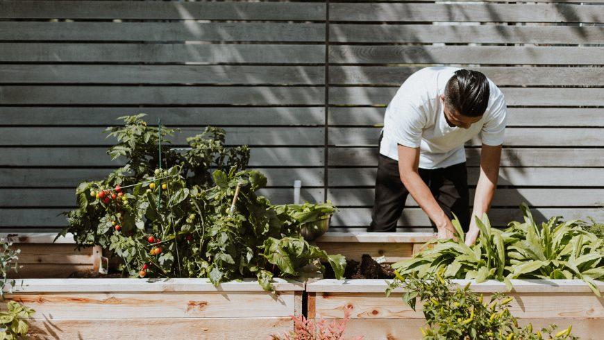 A man creating an eco-friendly garden