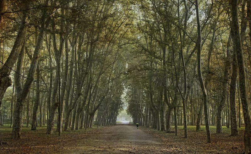 Park of Devesa