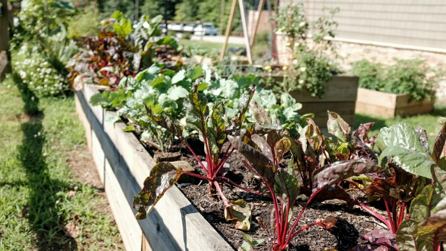 eco-friendly garden