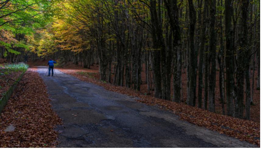 hiking trails in Foreste Casentinesi, Monte Falterona, Campigna National Park
