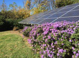 Solar panels and purple flowers