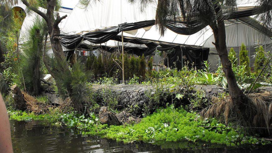 Lagoon of Xochimilco