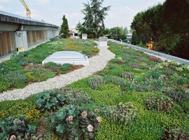 Green roof with plants