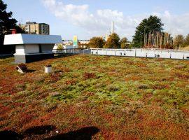 Scandinavian green roof