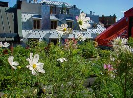 Green roof with flowers