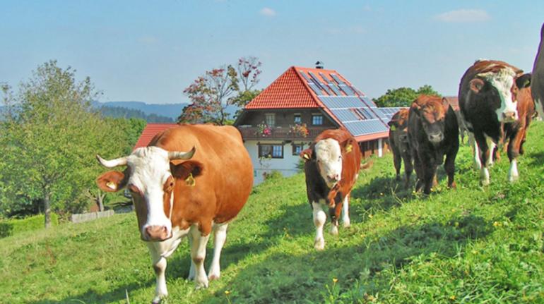 Organic farm in Germany